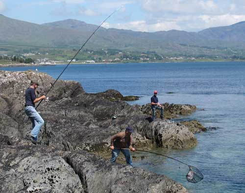 A nice Irish shore caught thornie enters the landing net.