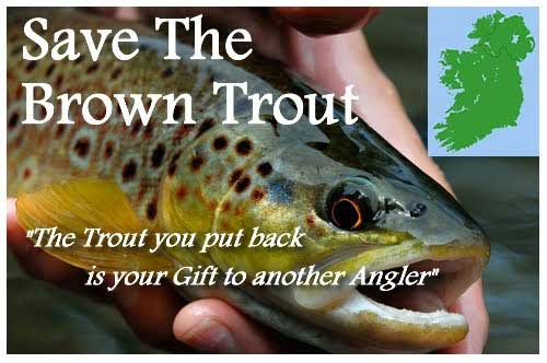 Save Ireland's Wild Brown Trout