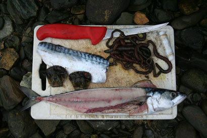 A variety of shore baits.