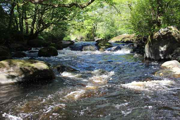 Stream view, Co. Wicklow, Ireland.