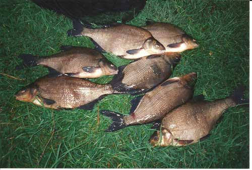 Bream catch from the River Barrow, Ireland.