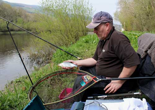 Coarse fishing the River Barrow, South East Ireland, for roach, hybrids, dace and bream.