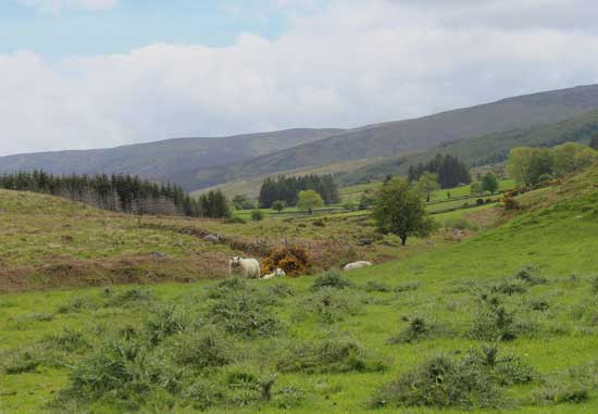 West County Wicklow, Ireland.