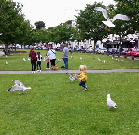 Killer toddler's, a very effective sea gull deterrent.