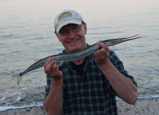Garfish caught off Kilcoole beach, Co. Wicklow, Ireland.