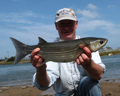 Grey mullet from the Vartry estuary, Co. Wicklow