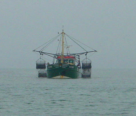 A bottom mussel dredger plying its trade.